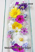 Gisela, FLOWERS, BLUMEN, FLORES, photos+++++,DTGK2546,#f#, EVERYDAY