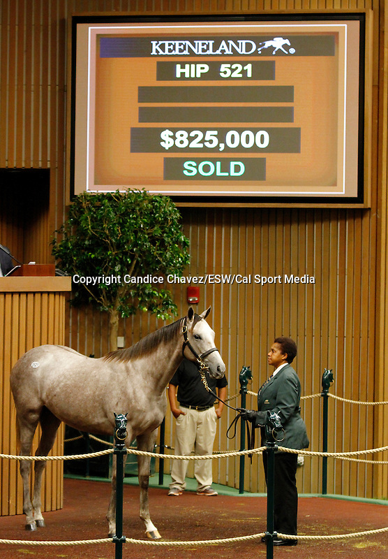September 16, 2015: Hip 521 Tapit - Pretty City filly consigned by Gainesway.  Candice Chavez/ESW/CSM