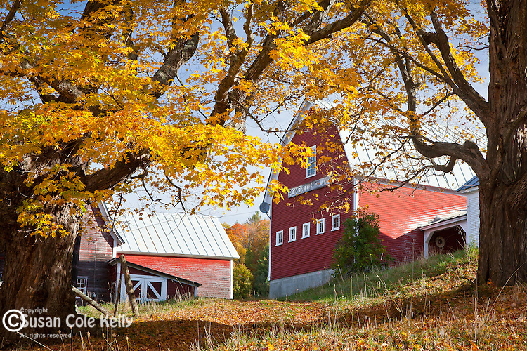 Fall foliage at Pomfret Highlands Farm in Pomfret, VT, USA
