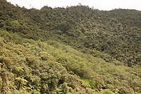 Reforestation in Tapichalaca, near the reforestation casita