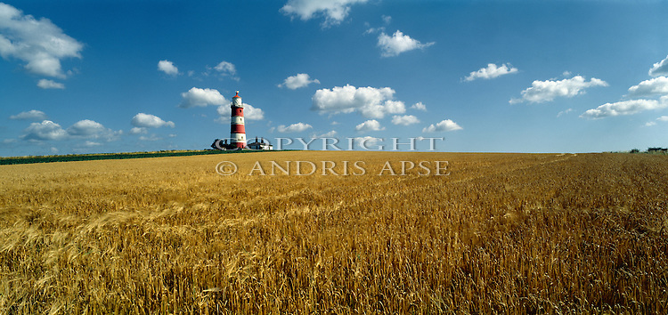 Lighthouse and wheatfield at Happisburg. Norfolk. England.