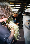 Ollie and Kerri making apple juice from the Bramleys.   Tinker's Bubble, Low impact community,  Somerset