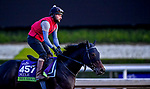 October 30, 2019: Breeders' Cup Mile entrant Hey Gaman, trained by James Tate, exercises in preparation for the Breeders' Cup World Championships at Santa Anita Park in Arcadia, California on October 30, 2019. Scott Serio/Eclipse Sportswire/Breeders' Cup/CSM
