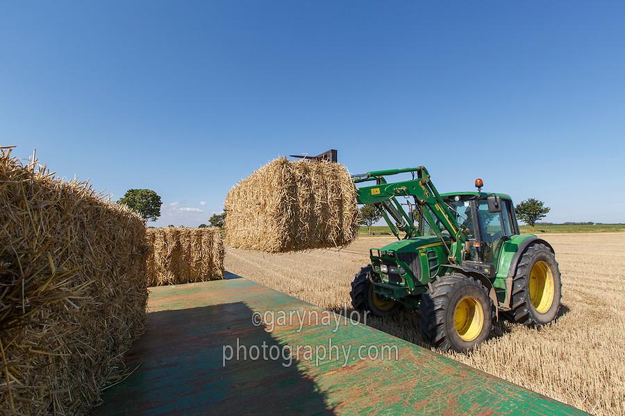 Loading wheat straw bales for livestock bedding - Lincolnshire, Septemnber