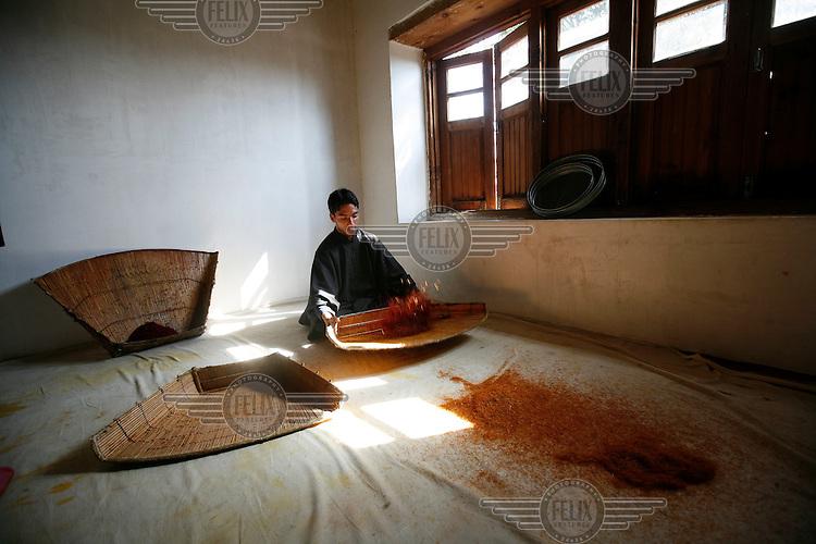 Saffron being prepared after harvest. Pampore, Kashmir, India. © Fredrik Naumann/Felix Features