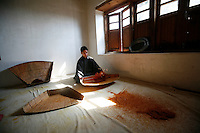 Saffron being prepared after harvest. Pampore, Kashmir, India. © Fredrik Naumann/Felix Features