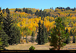Aspens and Evergreens, Boulder Mountain, Grand Staircase Escalante, Utah