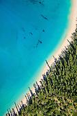 Plage de Kwâdë, bordée de pins colonnaires, Sud de l'Ile des Pins, Nouvelle-Calédonie