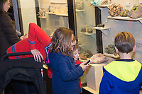 People enjoy the University of Wisconsin Geology Museum during the Holiday Sale on Friday, December 4, 2015
