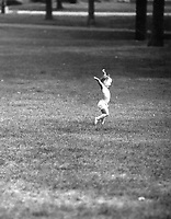 A child running in Central Park.