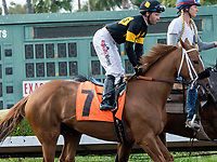 CYPRESS, CA. JULY 8: #7 Finest City ridden by Tyler Baze in the post parade of the Great Lady M Stakes (Grade ll) on July 8, 2017 at Los Alamitos Race Course in Cypress, CA (Photo by Casey Phillips/Eclipse Sportswire/Getty Images)