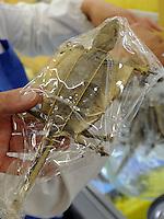 Simon Perry buying dried lizard in Qingdao Tesco in Qingdao, Shandong province, China. 11-Nov-2010