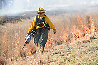 NWA Democrat-Gazette/FLIP PUTTHOFF <br />LINE OF FIRE<br />Anita Overbey with the Arkansas Forestry Commission lights grass on fire Tuesday April 10 2018 during a prescribed burn at the Northwest Arkansas Community College Nature Area Living Laboratory. Small grassland areas of the tract were burned mainly to eliminate invasive species, said Ellen Turner, faciiltator of the outdoor living laboratory. Fire also helps promote growth of native prairie seeds which have been planted in the areas, she said.