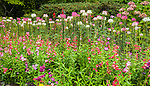 Ornamental flower garden in Butchart Gardens in Victoria, Vancouver Island, British Columbia, Canada