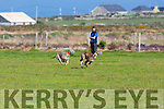 GlenDuff Lola and Rathronan Razi  in the semi-finals of the Reserve Oak Trial Stake and Denis K. Horgan Memorial Cup at Ballyheigue and District Coursing Club meeting on Sunday