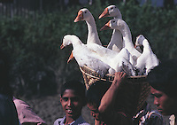 A gaggle of geese have a panoramic, if bumpy, journey in a basket on a man's shoulders at the Htsinbouseik ferry jetty near Rangoon, Burma.