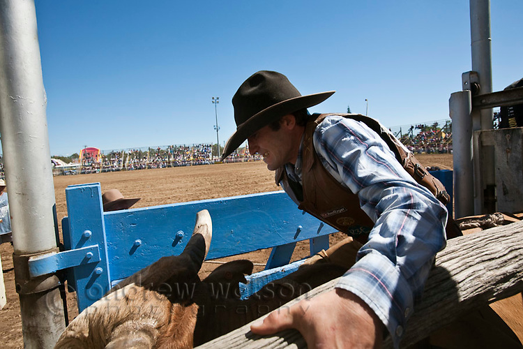 A bull rider holds on tight just before the bucking chute is opened.  Mareeba Rodeo, Mareeba, Queensland, Australia
