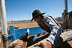 A bull rider holds on tight just before the bucking chute is opened.  Mareeba Rodeo, Mareeba, Queensland, Australia