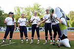 25 April 2016: Notre Dame's Carly Piccinich (11) chest bumps the team orca while being introduced as Katie Beriont (29), Ali Wester (37), and Micaela Arizmendi (2), and Caitlyn Brooks (16) watch. The University of North Carolina Tar Heels hosted the University of Notre Dame Fighting Irish at Anderson Stadium in Chapel Hill, North Carolina in a 2016 NCAA Division I softball game. UNC won the game 7-6.