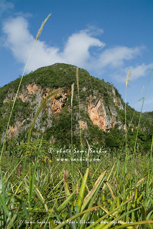 Mogotes rock formations covered with trees in the Vinales Valley, Cuba.