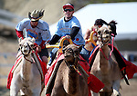Brade Emmans wins a heat against David Baxley and Crista Scronce during the 54th International Camel Races in Virginia City, Nev., on Friday, Sept. 6, 2013.  <br /> Photo by Cathleen Allison