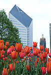 Tulips in Chicago in the spring