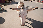 A burro stands in the middle of the street with its ears outstretched in Oatman, Ariz.