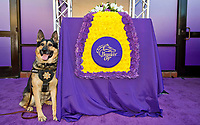 DEL MAR, CA - NOVEMBER 04: Canine Jack poses for a photo with the Breeders' Cup blanket Day 2 of the 2017 Breeders' Cup World Championships at Del Mar Racing Club on November 4, 2017 in Del Mar, California. (Photo by Anna Purdy/Eclipse Sportswire/Breeders Cup)