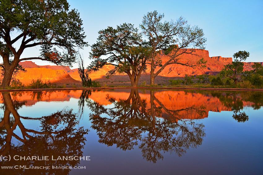 Cottonwood tree reflection. Professor Valley Utah.  October 2012..