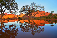 Cottonwood tree reflection. Professor Valley Utah.  October 2012..