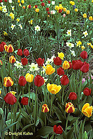HS08-013z  Tulip garden - Tulipa spp. mixed with daffodils - Narcissus spp.