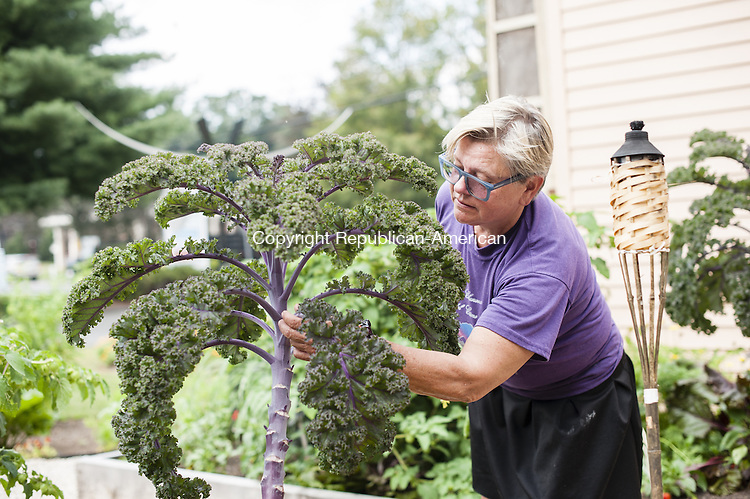 WOODBURY, CT-5 September 2014-090514EC03-  Carole Peck, the owner of Carole Peck's Good News Cafe, has a new herb and vegetable garden in the front of her Woodbury restaurant. She has at least thirty varieties, including kale, seen here. Erin Covey Republican-American
