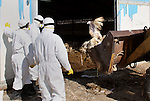 "Palestinian workers, wearing protective gear, stand near a bulldozer carrying alive turkeys at a live-poultry farm in the West Bank village of Serees, southern Jinin January 21, 2015. A flock of 17,000 turkeys has been diagnosed with the H5N1 ""bird flu"" virus in Jinin. The veterinary department of the Palestinian Authority Agriculture Ministry said it had managed to prevent an epidemic. Photo by Nedal Eshtayah"