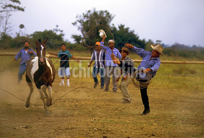 Cowboys in Quevedo, a city in the middle of the coast line of Ecuador