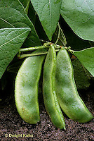 HS30-026b  Bean - lima bean - Fordhook variety
