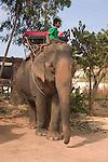 Boy mahout on elephant. Koh Lanta, Thailand