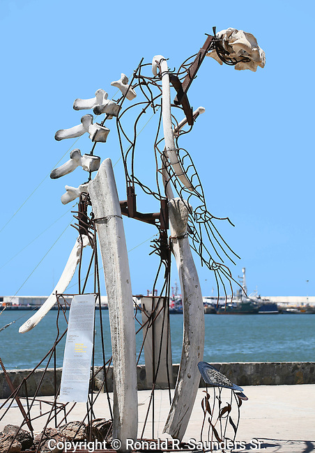 The WHALE MAN<br />