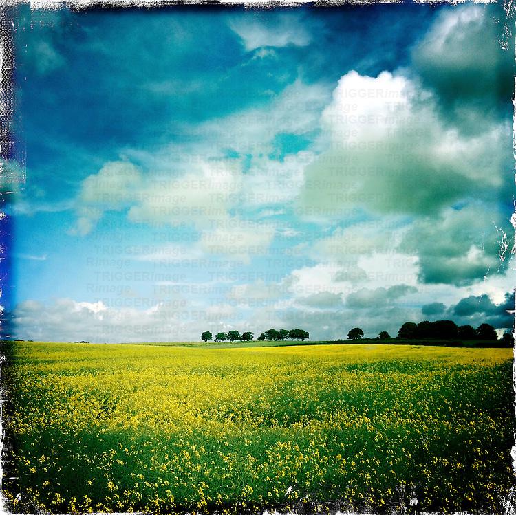 Yellow landscape, Yorkshire, UK
