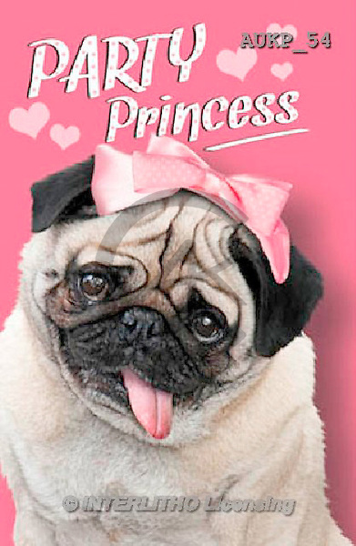 Samantha, ANIMALS, REALISTISCHE TIERE, ANIMALES REALISTICOS, funny, photos+++++Party Pug Pink Master,AUKP54,#a#