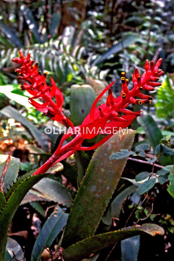 Flores Bromélias da Mata Atlântica. MG. Foto de Ricardo Azoury.