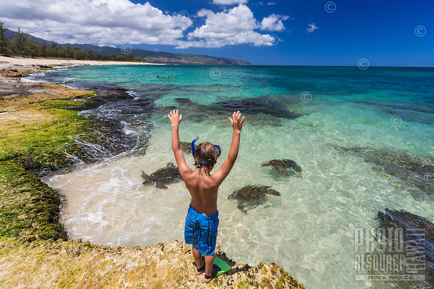 A young boy watches green sea turtles or honu on the North Shore of O'ahu.