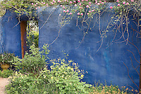 A blue wall with cascading pink roses creates a Mediterranean atmosphere at the Antique Rose Emporium in San Antonio. Texas