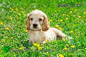 Marek, ANIMALS, REALISTISCHE TIERE, ANIMALES REALISTICOS, dogs, photos+++++,PLMP3159,#a#, EVERYDAY