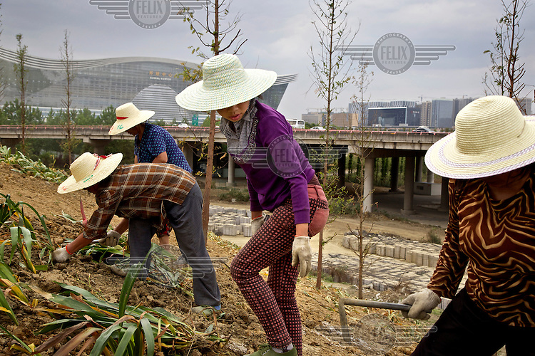 Former farmers plant trees and sow grass seeds in a park built over farmland in southwestern China's Chengdu city. The local government is razing villages and farmland on the outskirts of the city to make way for urban development. These women are from the distant township of Guang'an. They work in brigades and sleep in dormitories. They each earn around 1,000 yuan per month landscaping the city, an improvement over subsistence farming. The Chinese government plans to move 250 million rural residents into urban areas over the coming dozen years though it is unclear whether people want to move and where the money for this project will come from. Further urbanisation is meant to drive up consumption to counterbalance an export orientated economy and end subsistence farming but the drive to get people off the land is causing tens of thousands of protests each year. /Felix Features