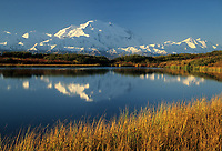 20, 3020+ Ft. Mt. Denali, Autumn Grasses, Reflection Pond, Denali National Park, Alaska