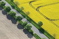 Rapslandschaft: EUROPA, DEUTSCHLAND, SCHLESWIG- HOLSTEIN, (GERMANY), 01.05.2014: Rapslandschaft, Felder, Baeume, Strasse, Raps in Schleswig Holstein, typische Nordeutsche Landschaft