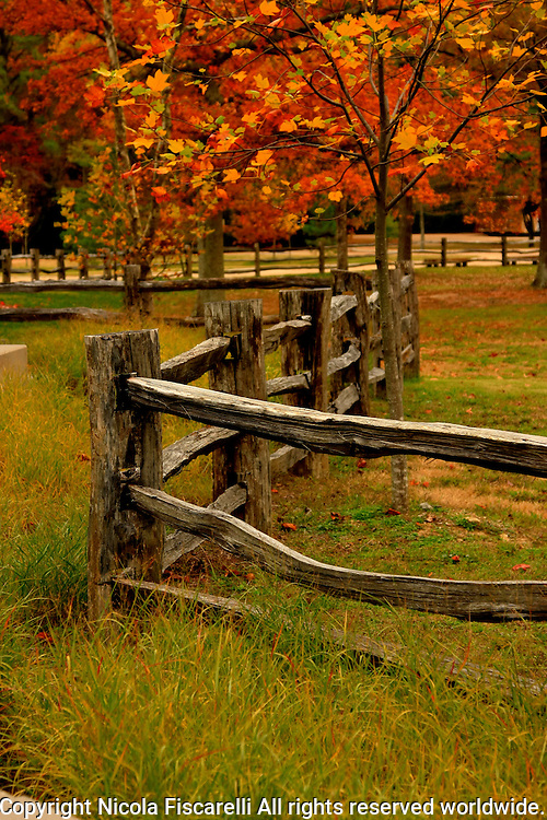 Bright fall colors in the historical colony of Jamestown Virginia.