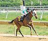 Easy Ten winning at Delaware Park on 9/9/15