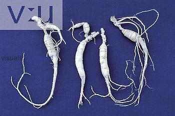 Ginseng roots ,Panax quinquefolius,.