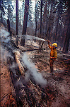 August 15, 1990 Yosemite National Park  --  A-Rock (Arch Rock) Fire  -- Stanislaus National Forest firefighter Rocco Pallante sprays water on smoldering logs. The Arch Rock Fire burned over 16,000 acres of Yosemite National Park and the Stanislaus National Forest.  At the same time across the Merced River, the Steamboat Fire burned over 5,000 acres of both Yosemite National Park and the Sierra National Forest.